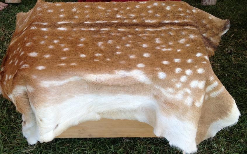 Air Skinning a Fox, Impressive – Speed Skinning a Deer, Very Impressive!